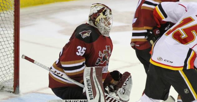 Tucson Roadrunners Goaltender Hunter Miska