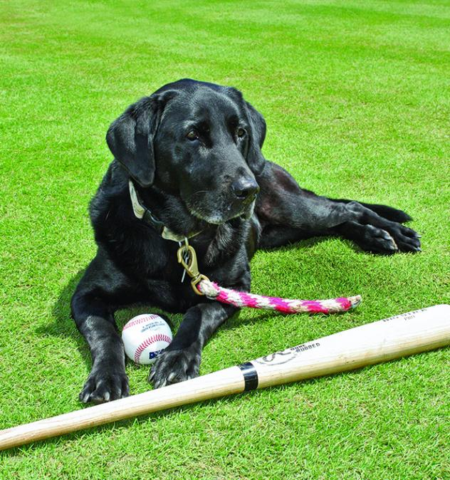 Greensboro Grasshoppers bat dog Miss Babe Ruth