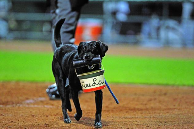 Greensboro Grasshoppers bat dog Miss Lou Lou Gehrig