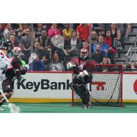 Colorado Mammoth Goaltender Alex Buque