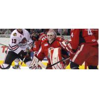 Grand Rapids Griffins Goalie Tom McCollum vs. the Rockford IceHogs