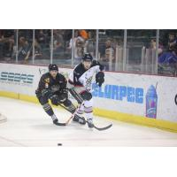 Quad City Mallards vs. Brampton Beast