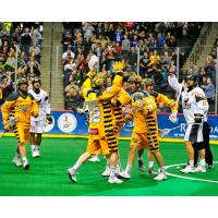 Minnesota Swarm Celebrate vs. New England Black Wolves