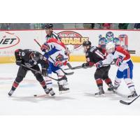 Lake Erie Monsters vs. Hamilton Bulldogs