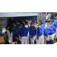 Midland RockHounds Celebrate in Dugout