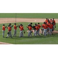 Long Island Ducks Give High Fives after Win