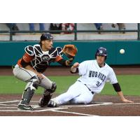 Duluth Huskies Slide Home against the Eau Claire Express