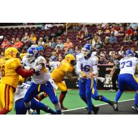 Tampa Bay Storm Quarterback Jason Boltus in the Pocket against Cleveland
