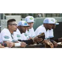 Daytona Tortugas on the Bench