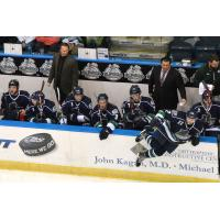 Florida Everblades Bench