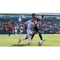 Rochester Rhinos in Action