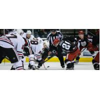 Grand Rapids Griffins vs. Rockford IceHogs