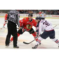 Portland Winterhawks Face off with the Tri-City Americans