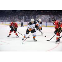 San Diego Gulls Left Wing Max Friberg vs. the Stockton Heat