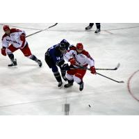 Allen Americans Battle the Wichita Thunder for the Puck