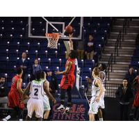Justin Moss of the Orangeville A's Goes up against the Niagara River Lions