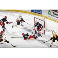 Chicago Wolves Pressure the Grand Rapids Griffins