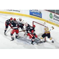 Chicago Wolves and Grand Rapids Griffins Scramble in Front of the Grand Rapids Net