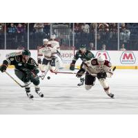 Chicago Wolves and Iowa Wild Race for the Puck