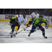 Mississippi RiverKings Captain Leo Thomas vs. the Pensacola Ice Flyers