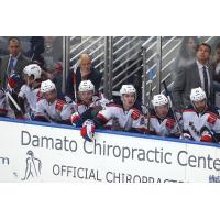 Hartford Wolf Pack Bench