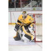 Brandon Wheat Kings Goaltender Jordan Papirny