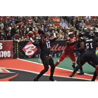 Orlando Predators QB Randy Hippeard vs. the Jacksonville Sharks