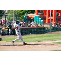Green Bay Bullfrogs Infielder Quincy Nieporte