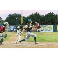 Bullfrogs Winning Streak Snapped by Woodchucks