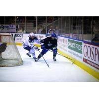 Forward Belisle Joins the Ice Flyers