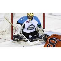 Free Agent Goaltender Summerhays Signs with Oilers