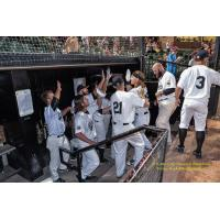 River City Rascals Season in Review