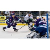 Solar Bears at Everblades