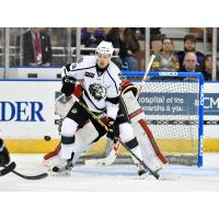Manchester Monarchs Weekly Preview