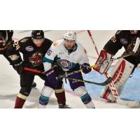 Solar Bears Loan Werek to Texas Stars