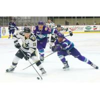 Solar Bears Shine in Wheeling, 5-2