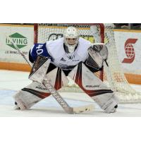 Booth Brilliant In Bathurst As Seadogs Pick Up Eighth Straight Win