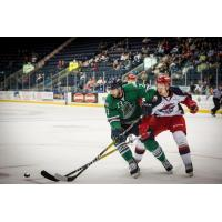 Everblades Tamed by Jackals in 3-1 Loss