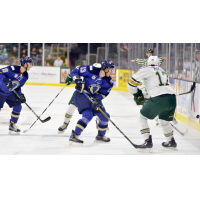 Swayman, Stampede Hold off Sioux City on Home Ice