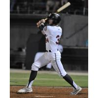 Lucas Erceg Named Carolina League Player of the Week