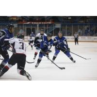 SEA DOGS END LOSING SKID WITH OTTRIUMPH OVER HUSKIES