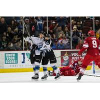 Steelheads Top Americans in Fight-Filled Affair
