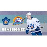 Dzierkals Reassigned to Solar Bears by Marlies