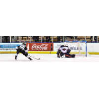 Matt Marcinew of the Manchester Monarchs Scores against the South Carolina Stingrays