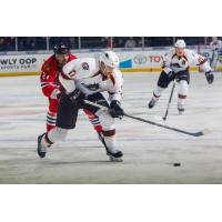 Cleveland Monsters Battle the Rockford IceHogs