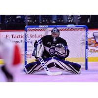 Reading Royals Goaltender Branden Komm