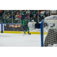 The Florida Everblades eye the Jacksonville Icemen net and Goaltender Austin Lotz