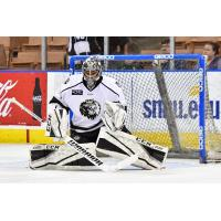 Manchester Monarchs Goaltender Charles Williams