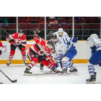 Ottawa 67's face off against the Mississauga Steelheads