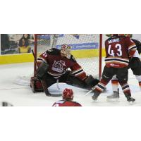 Tucson Roadrunners Goaltender Adin Hill stops a Stockton Heat shot